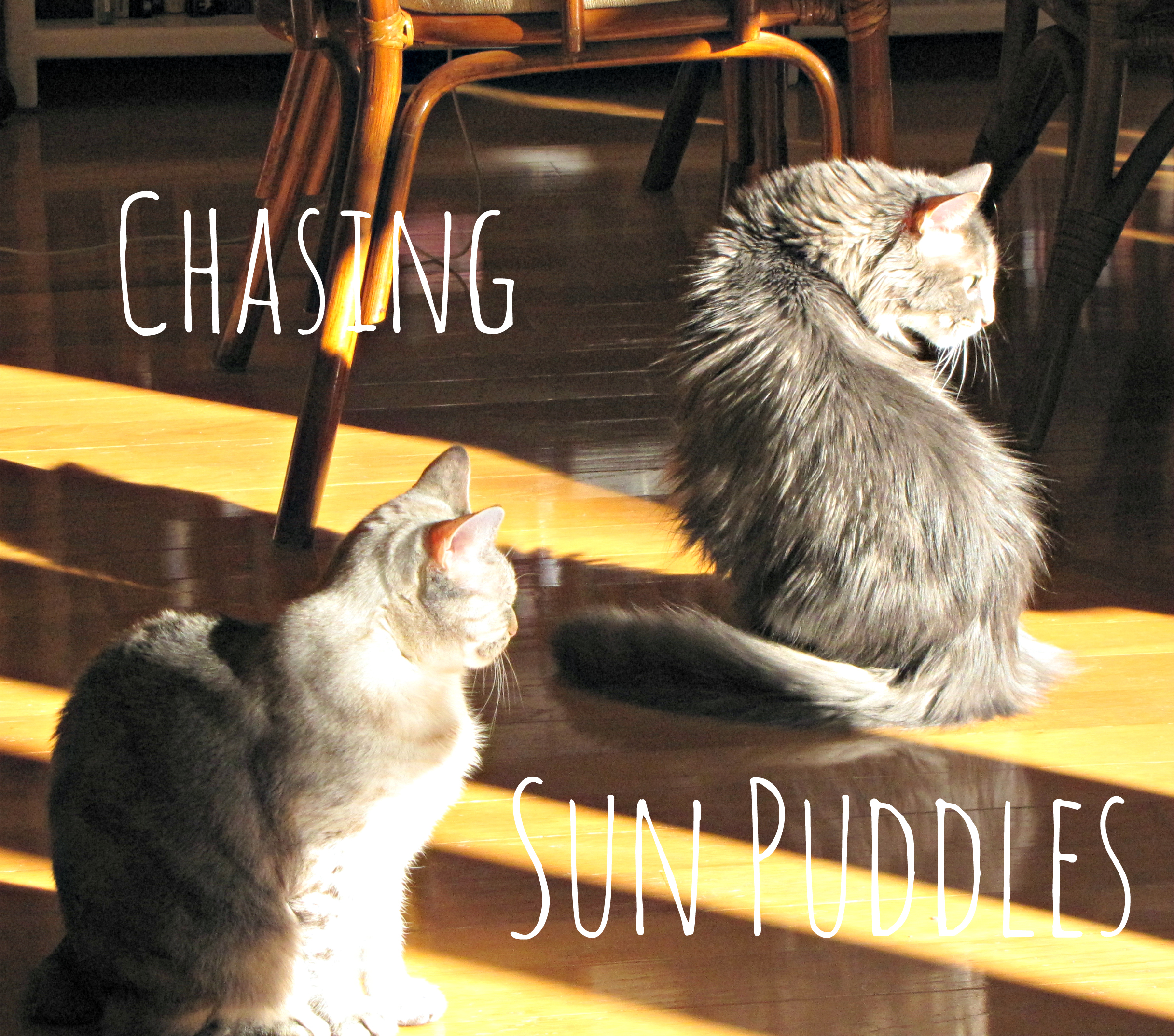 Chasing Sun Puddles