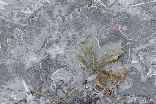 Prisoner of ice / Prisonnière de la glace by guysamsonphoto