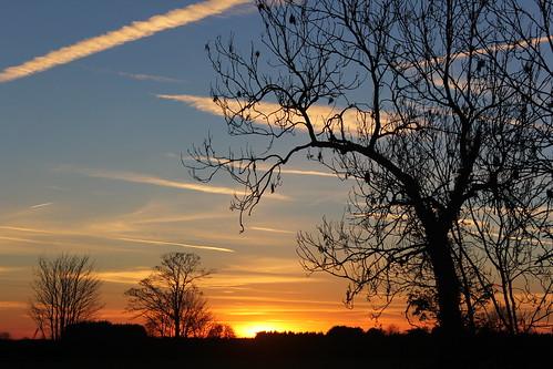 trees light sunset sky panorama cloud sun sunlight field grass silhouette skyline clouds sunrise skyscape glow sundown farm tracks silhouettes sunny wideangle cotswolds gloucestershire farmer glimpse sunray glint sunglare
