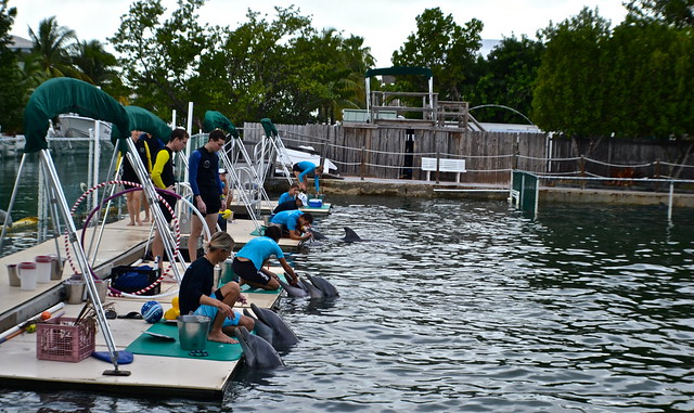 Swimming with Dolphins - Key Largo, Florida - trainers and dolphins