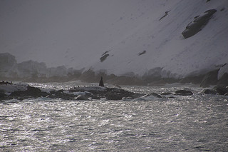 048 Elephant Island - Point Wild buste kapitein Pardo