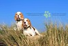 The Beagles | Camber Sands | Pet Photography London