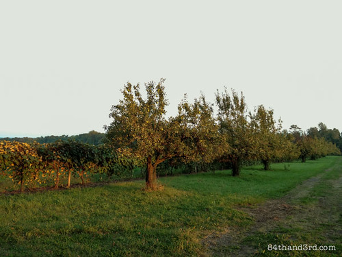 Vineyard and orchard