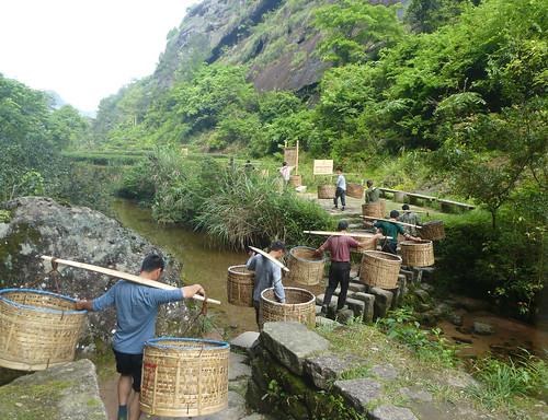 Fujian-Wuyi-Shuillandong-Dahongpao (66)