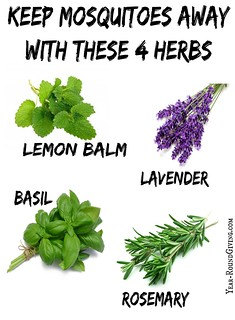 Keep Mosquitoes Away with Herbs