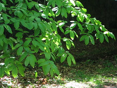 Leaves - Photo of Ménéac