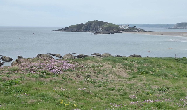 Burgh Island with thrift