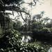 Parque Municipal- Belo Horizonte