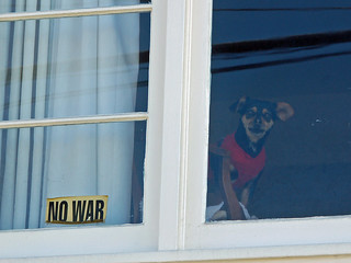 no war:peace:dog in window.jpg