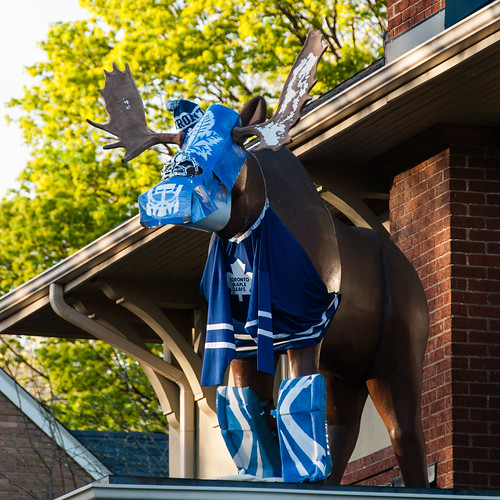 Mount Pleasant Masked Maple Leaf Moose - #127/365 by PJMixer
