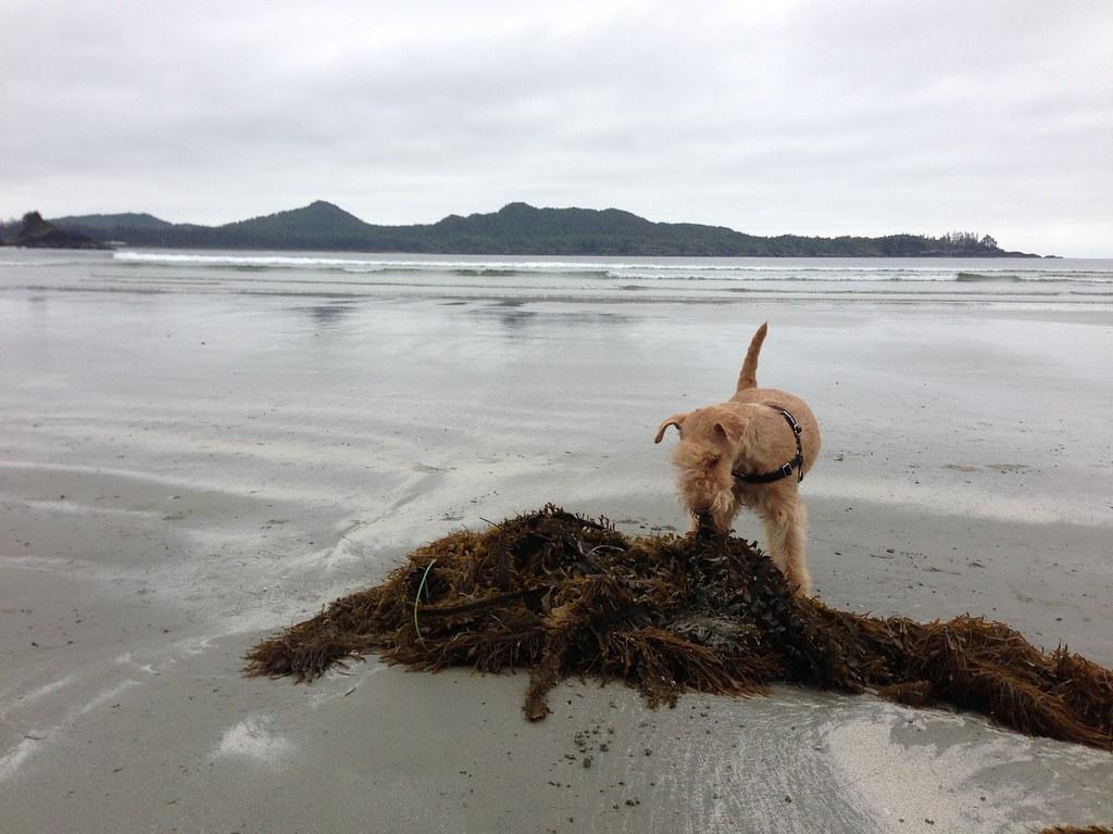 Chompin' on some seaweed