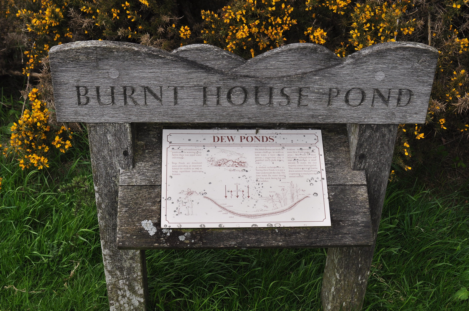 Burnt House Pond Dew Pond sign