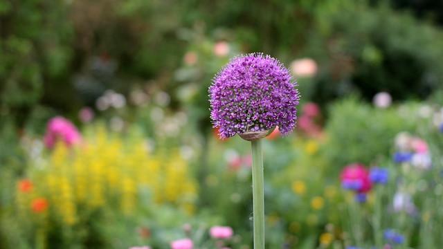 Giverny Monet's Garden