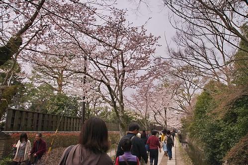 【写真】2013 桜 : 哲学の道/2018-12-24/IMGP9197