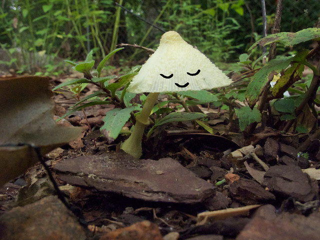 mushrooms-faces-3