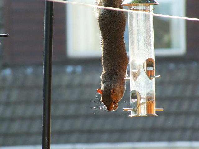 A normal station feeder