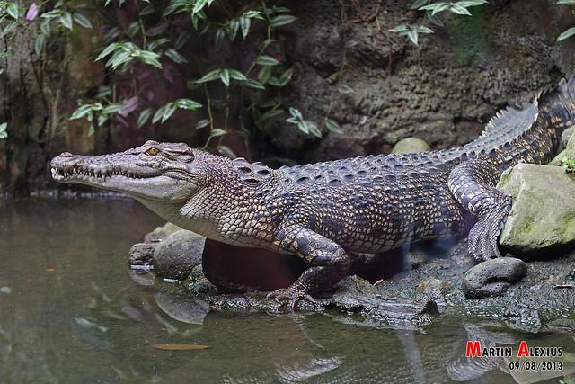 Header of ragunan zoo