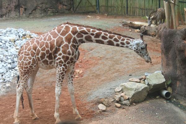 Atlanta Zoo '13, 2