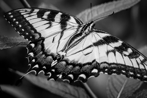 Schmetterling by kenfagerdotcom