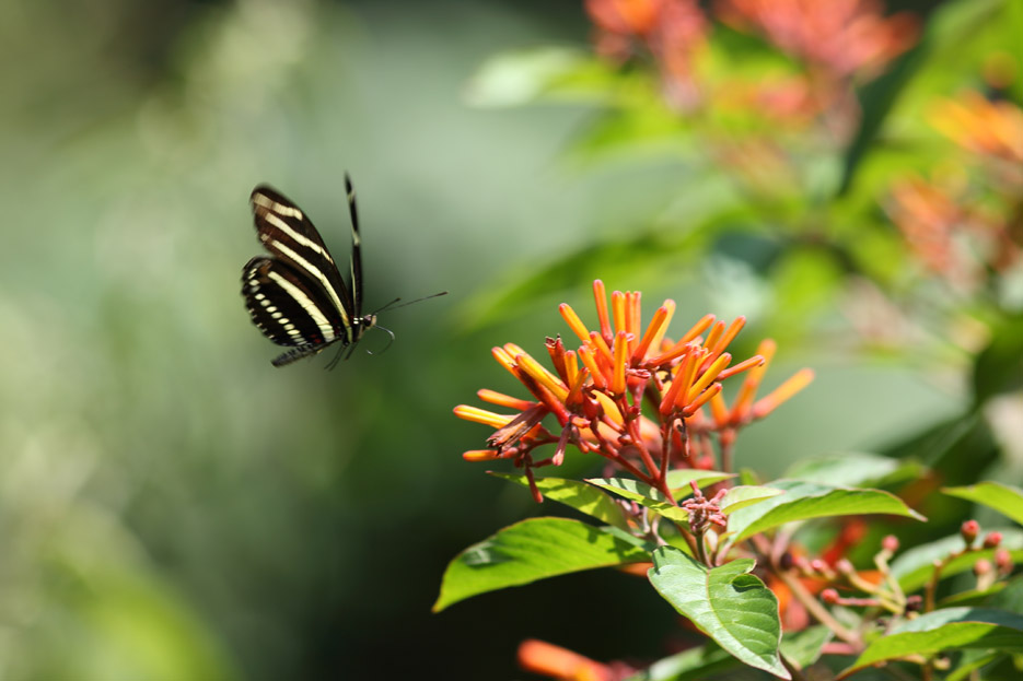 073113_bug_butterfly10