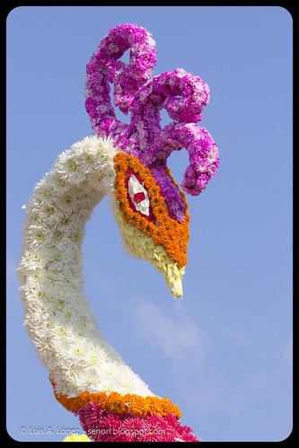 Batalla de las Flores 2013 Laredo