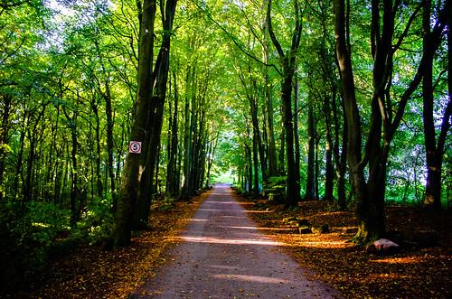 Goodbye Summer,Hello Autumn. Explore  ( 29 / 10 / 13 ).