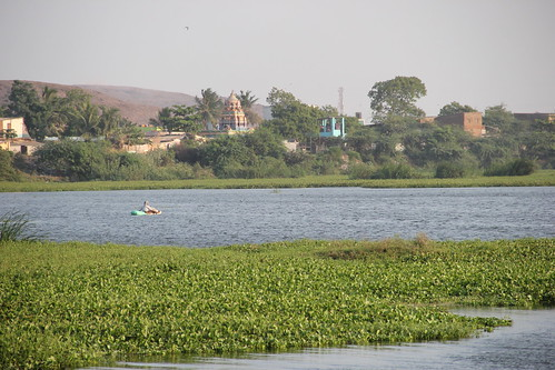 A man fishing in Chennai's Ambattur Eri
