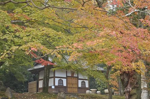 【写真】紅葉 : 岩屋寺