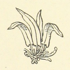 Image taken from page 37 of 'Aunt Judy's Song-Book for Children'