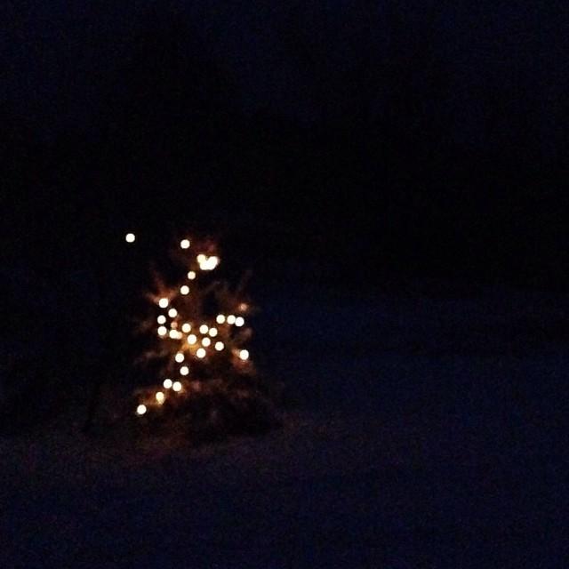 twinkle light