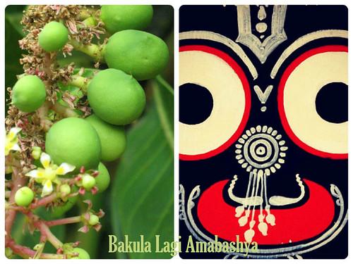 Bakula Lagi Amabashya