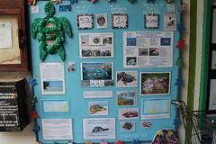 WTW在社區裡的超市門口放置展示版,即時更新救傷中心內的海龜數目、野放的數目;即介紹海龜保育概況。展示版上並創意使用海洋廢棄物做裝飾。(許惠婷攝。)