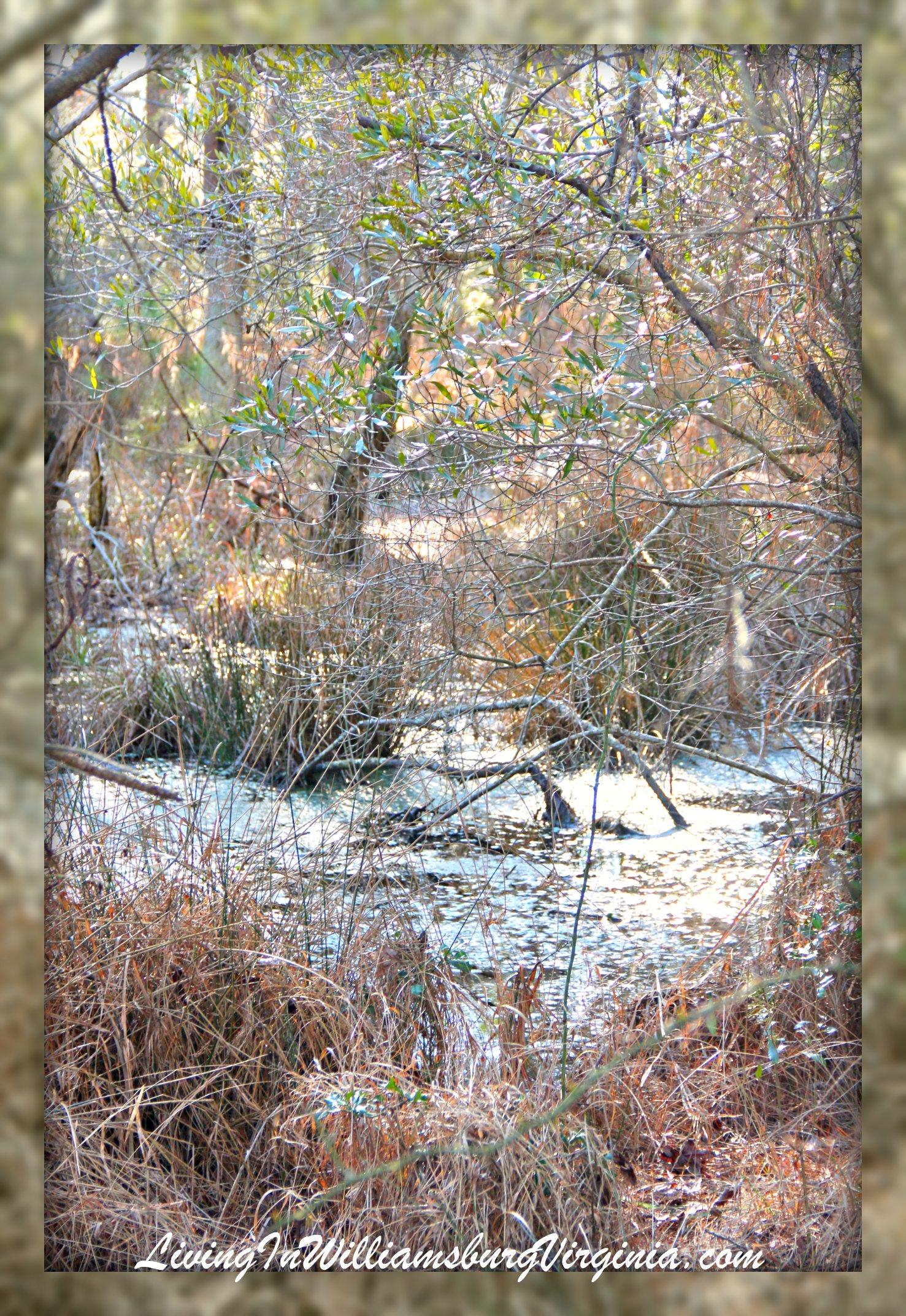 Ice Marsh