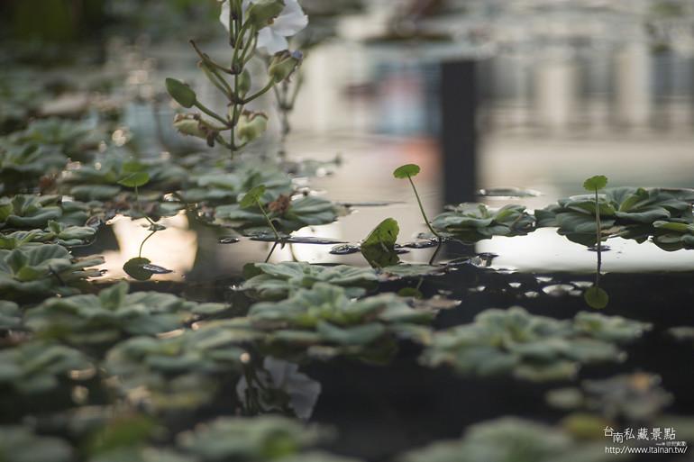 台南私藏景點--隨光呼吸素食豆乳霜淇淋 (12)