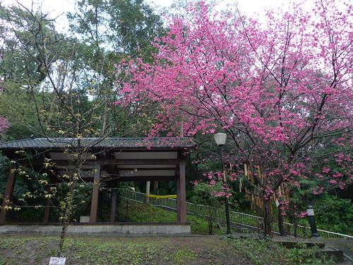 20140204-平溪天燈節 (35)
