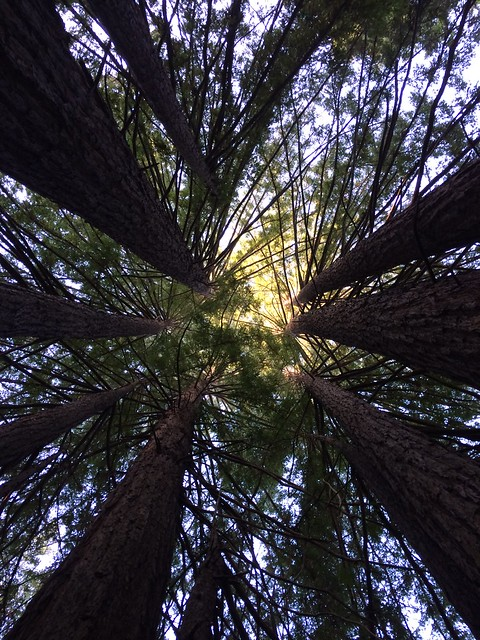 KatieWalker_trees DesignCatgory