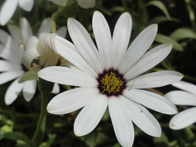 flowers in Jallianwala Bagh, Amritsar