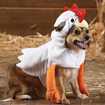 dog chicken