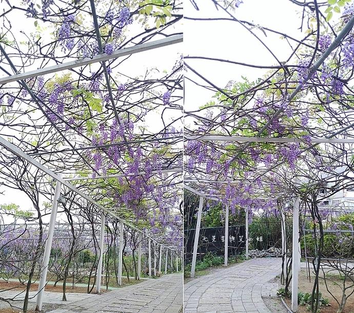 8 紫藤咖啡園 2014