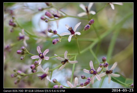17_20140323_Purple