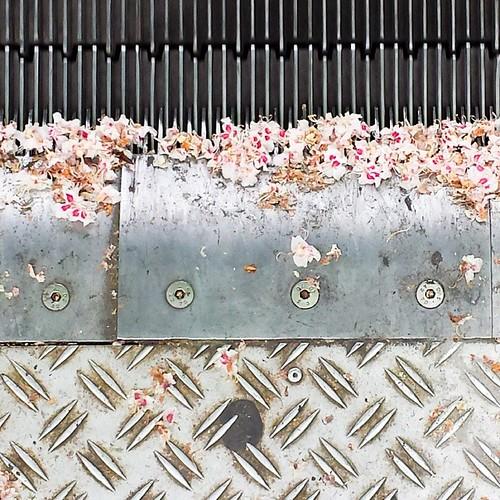 'Spring' - #brussels #belgium 2014 #spring #flowers #hayfever #hay #fever #escalator #photography