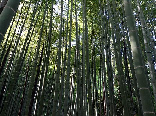 houkokuji_1