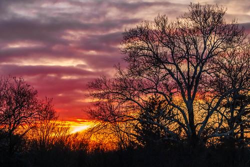 winter sunset sky golden newjersey pentax leafless plainsboro pentaxart k5ii