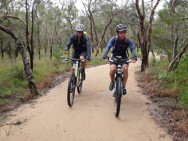 Bush track at Caboolture