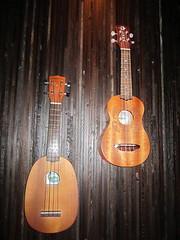 cuatro, string instrument, ukulele, guitar, acoustic-electric guitar, string instrument,