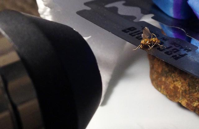 Wasp on a Razor Setup 20150217-wasp-on-razor-iphone-IMG_1547