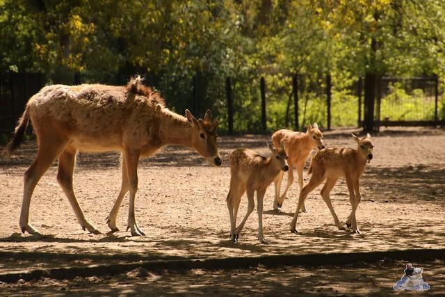 Tierpark Berlin 05.05.2016  074