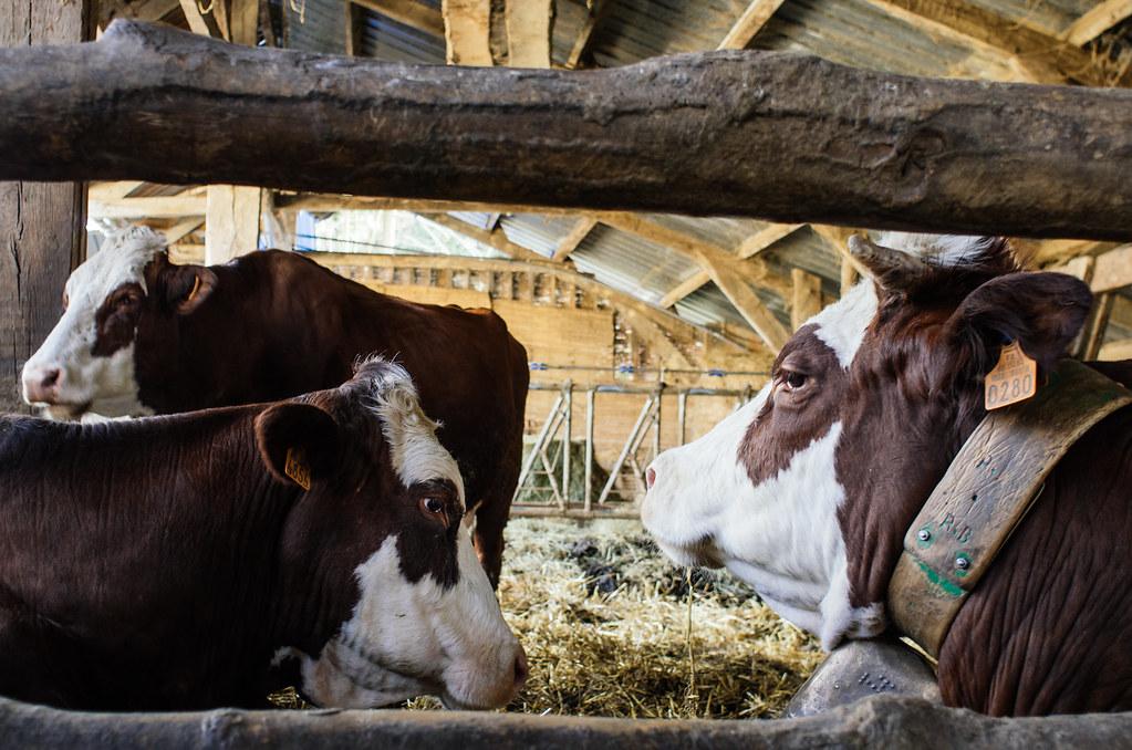 Agriculture dans les Pyrénées - carnet de voyage france