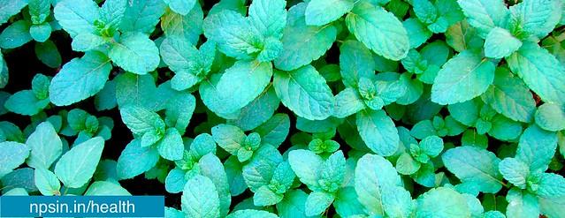 Health: Benefits of Mint in Summer - npsin.in