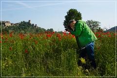 2016-05-07-papaveri a castello 2-0348_Fotor
